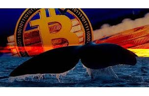 クジラとマイナーが教える ビットコイン強気相場再開の兆候