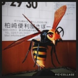 『オオスズメバチ駆除案件 vol.1』の画像