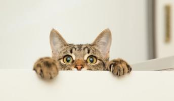 「猫は死にそうになると姿を消す」は本当?通説の真偽は