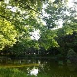 『戸田市後谷公園 緑あふれる水辺と街路樹が気持ち良いです』の画像
