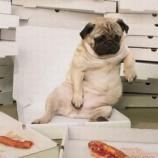 『生薬としての脂肪 その1』の画像