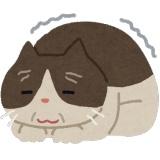 ヨボヨボのワイのネッコ「ヨイショ…ヨイショ…」 ワイ(どこ行くんやろ…??)