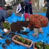 プランターの花苗の植え替え(伊奈波界隈まちつくり会)