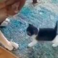 子ネコたちが犬の周りに集まった。よし、みんな行くぞぉ! → 子猫たちはこうなります…