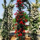『エレガントな春の薔薇が見頃!世界最大級のバラ園「花フェスタ記念公園(岐阜県・可児市)」がオススメですよ。』の画像