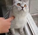 【動画】ひたすら何も無い壁を凝視しつづけるネコがヤバイ……
