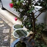 『雨でも桜・元気に開花』の画像