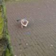 (  ´ん`)「ベランダでウ●コしまくる鳩許さない」