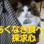 【テレビ・ネットで話題】赤城乳業のかじるバターアイス・アレンジしてみた!
