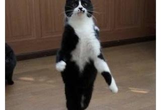 【画像】ネッコさん、猫背じゃなかった