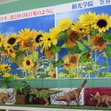 『向日葵』の画像