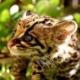 【動物画像】暇やし、野生種のモフモフの画像貼るわ