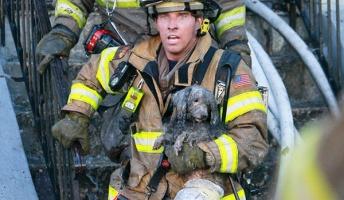 火の海に突入!危険をかえりみず動物達の命も救う消防士の姿