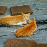 『現場猫』の画像