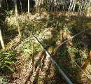 竹30本伐採の「怪事件」 〝犯人〟の正体は意外にも…動機は「秘密基地作り」