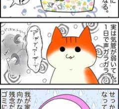 【5コマ】猫たちが喜ぶと思って買ったアレ。完