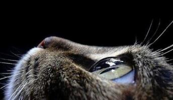 子どもの頃に助けた猫が恩返ししに来た