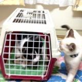 猫兄弟の初対面!新宿のハナ VS 十条のレオンのサムネイル