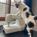 『お裁縫と猫』の画像