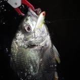 『レンジバイブでブレイクに付いたキビレを釣る』の画像