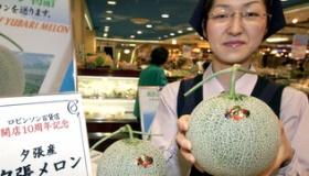 【食品】  マジかよ・・・。 日本で売られている トップグレードの「夕張メロン」の価格は、120万円らしい・・・。   海外の反応