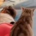 ネコが女の子のそばを離れない。どんな時でも一緒だよ → 猫はいつもこうします…