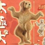 「太極犬」~太極拳をするワンコたちがフィギュアになってガチャに登場!
