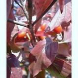 『秋の風情』の画像