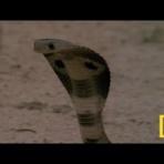 動物園では見れない野生動物の生態を無料動画で見る Infection Control Animal Cafe