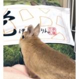 『【乃木坂46】凄すぎ!!羽生善治先生の嫁、羽生理恵さんが伊藤かりんタオルについて大量ツイートwwwwww』の画像