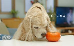 """大好きな""""秋の味覚""""を食すワンコ"""