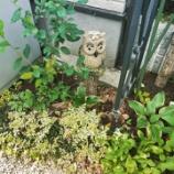 『ここから始まる♪雑木の庭作り』の画像