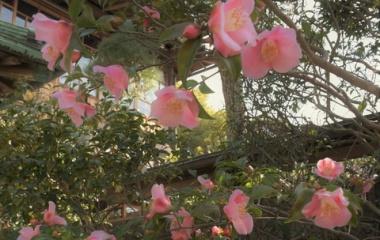 『花残月 6 港の春』の画像