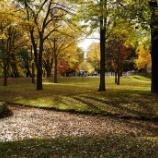 『いつか行きたい日本の名所 北海道大学札幌キャンパス』の画像