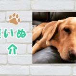 『【動画】保護犬紹介 ラブラドール オリバーくん 推定3歳 | お散歩 | Labrador Retriever』の画像