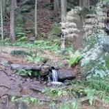 『大滝神社』の画像