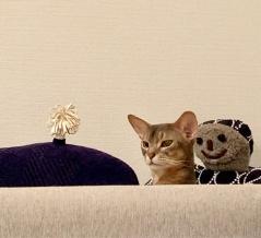 おやすみ前に、キュルンなぼくちんをどうぞ(*´ω`*)