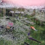 『1月に雪化粧した「モネの池」(岐阜県関市)の貴重な絶景写真!もうこの冬には見られないかもしれませんね。』の画像