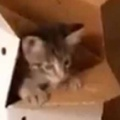 新入り子ネコが箱から顔を出した。そこに先住猫がやってくる → こうなった…