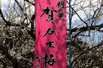 賀名生梅林【2014】